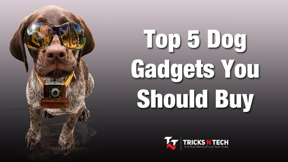 Top 5 Dog Gadgets